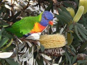 2019 Wollongong Australia bird