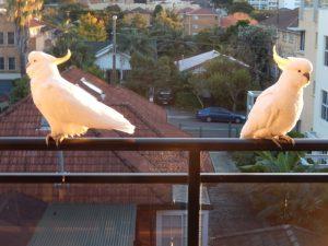 2019 Wollongong Australia birds